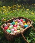 Beginning Ready eggs